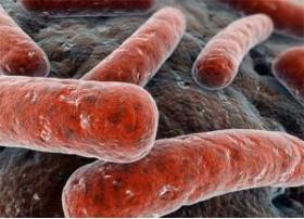 DIAGNOSTIK DER TUBERKULOSE IM BEHANDLUNGSSTUHL - Bimedis - 1